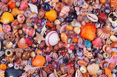 Seashells 1000 Piece Jigsaw Puzzle by Piatnik